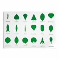 Botany Cabinet Control Chart