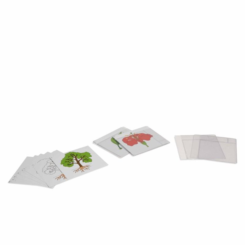 Botanischer Kartensatz - Serie 1