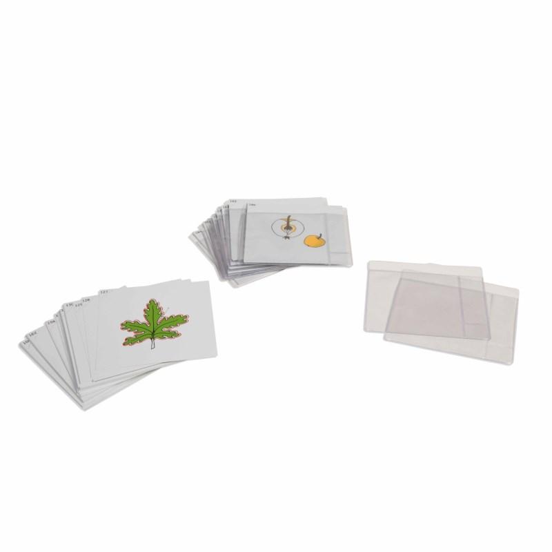 Botanischer Kartensatz - Serie 3