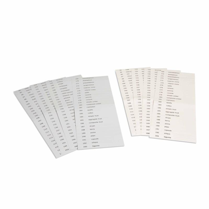 Name Cards: Third Set Of Botany Cards