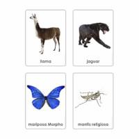 Animales De Los Siete Continentes