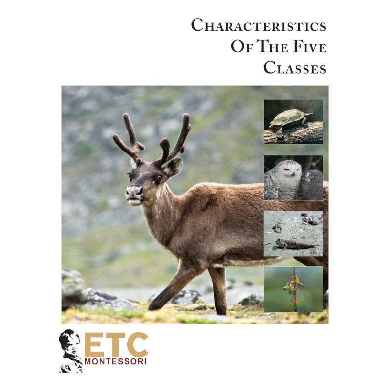 Main Characteristics Of Vertebrates