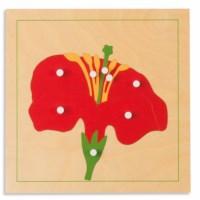 Botany Puzzle: Flower