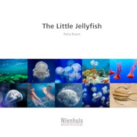 The Little Jellyfish