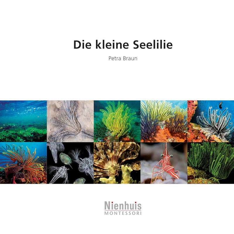 Die kleine Seelilie (German version)