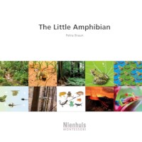 The Little Amphibian