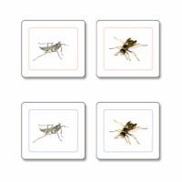 Insectos Trabajo De Emparejar