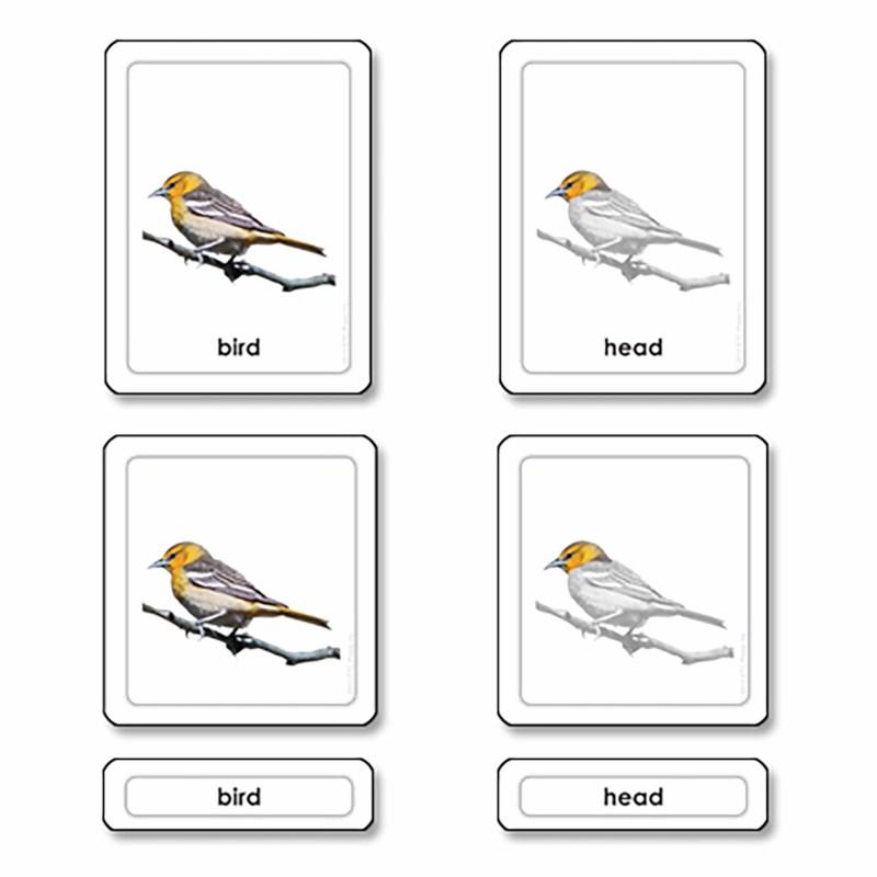 parts of a bird aves nienhuis montessori