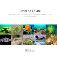 Timeline Of Life