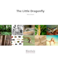 The Little Dragonfly
