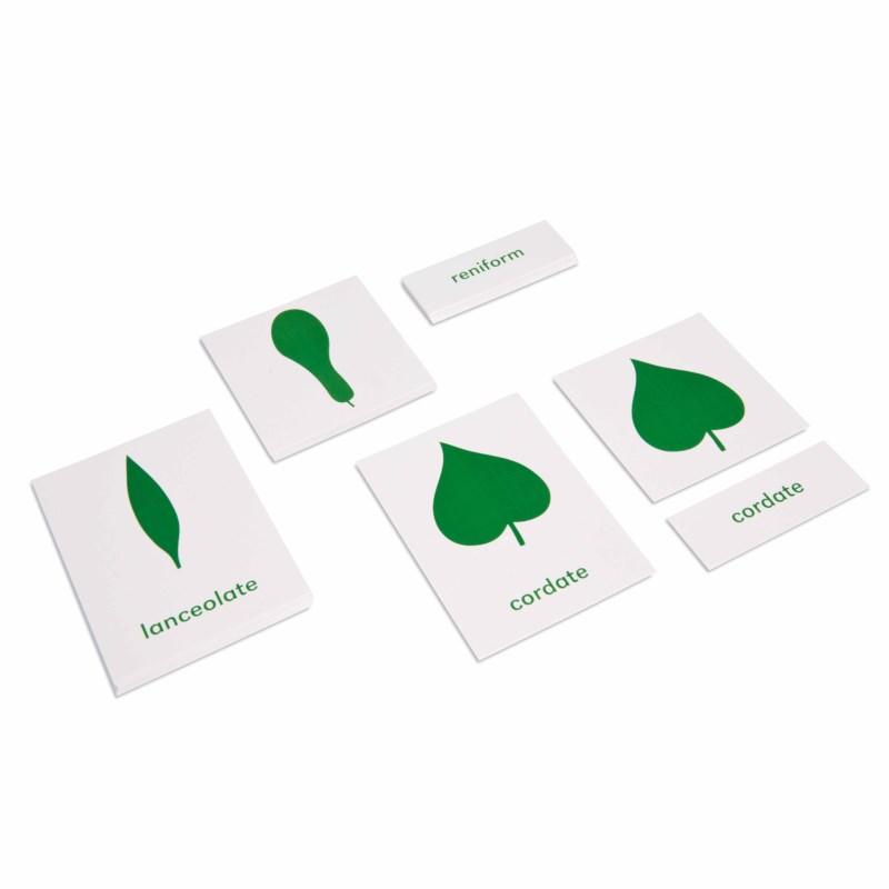 Botany Cabinet: Nomenclature Cards
