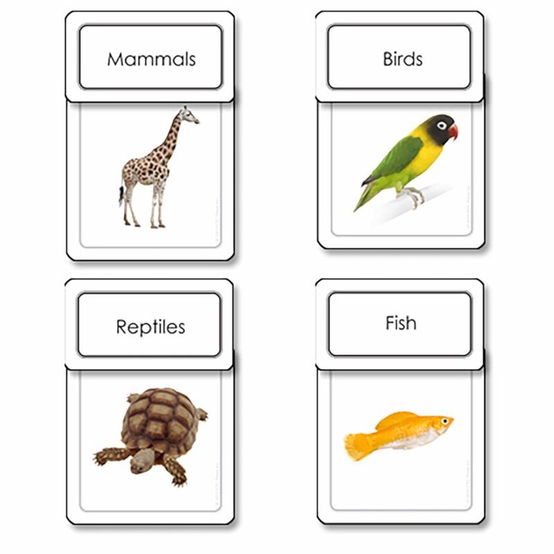 Five Classes of Vertebrates Sorting Cards
