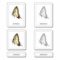 Parts of a Butterfly (Insects)