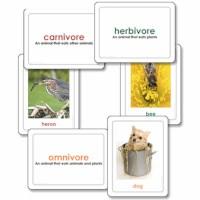 Carnivores, Herbivores & Omnivores