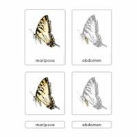 Partes de la Mariposa
