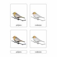 Partes del Pájaro